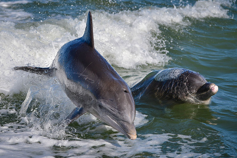 Marco Island Classic Dolphin Tours